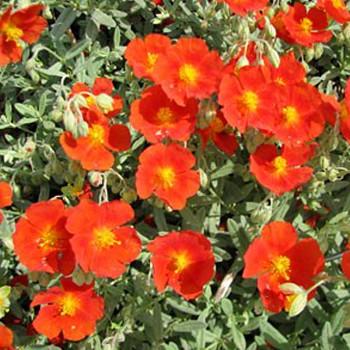DEVATERNÍK ´FIRE DRAGON´ - oranžovočervený