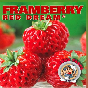JAHODNÍK FRAMBERRY RED DREAM
